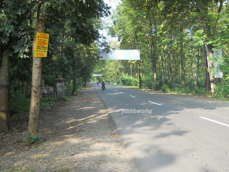 Jalan Raya Balapulang samping perhutani