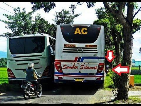 balapan bus dingawi