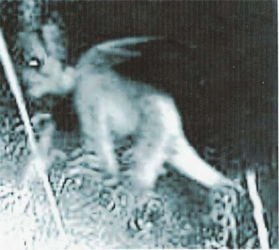 anjing siluman