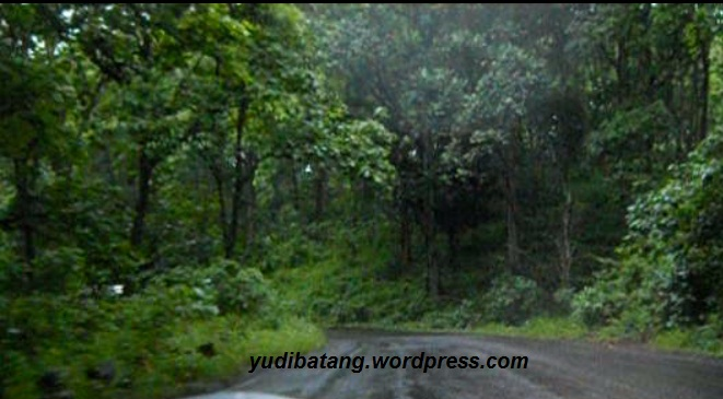touring melewati hutan
