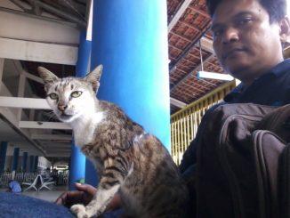 kacing liar