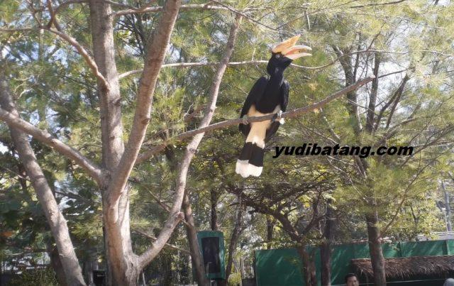burung rangkong