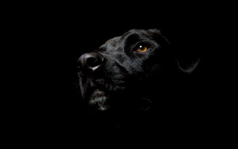 misteri siluman anjing bersungut lele